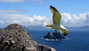 Gull Wars