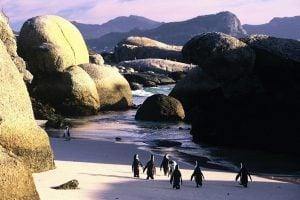 Cape Town Pass 3